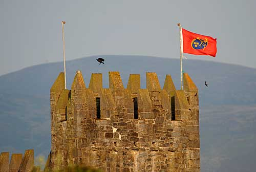 Munster Flag in Fethard