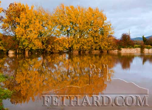 Autumn colours reflecting on the flood waters in the Abbey Field, Fethard, following the recent heavy rain. Photo by Larry Kenny.