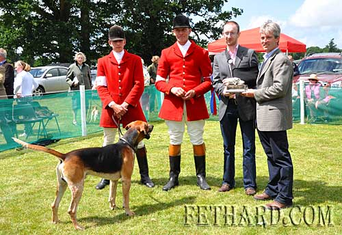 Another Tipp win at the All Ireland Championship Hound Show held at Stradbally Hall, Co. Laois. (Photo by Noel Mullins)