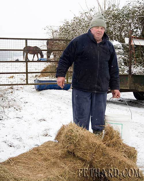 Local trainer Billy Treacy lookinging after feed for his horses at The Valley, Fethard.