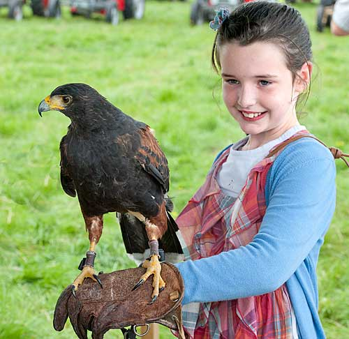 Katie O'Flynn with female Harris Hawk at the Moyglass Vintage Day