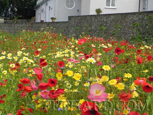 Wild flowers planted by the Tidy Towns on the banks of the Clashawley proved very popular with locals and a delightful burst of colour to passers by on Madam's Bridge