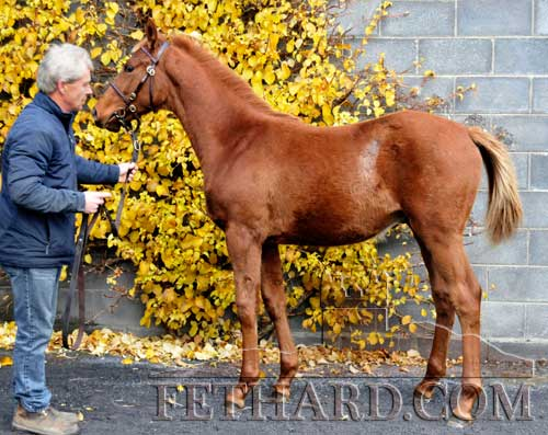 Francis Quinn, Railstown Stud, holding foal 'Beneficial' sold to John O'Byrne for €44,000.